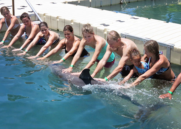 Bucket List: Swim with Dolphins. They are such beautiful creatures!!