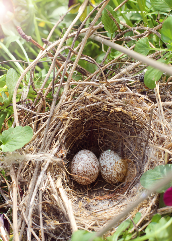 Two tiny eggs that will become beautiful birds. How amazing.